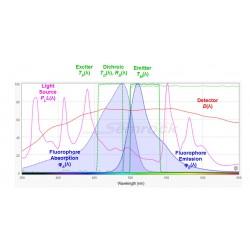 Simulation eines Fluoreszenzmikroskopie